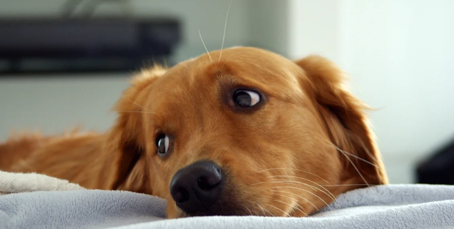 В Госдуме раскритиковали идею ввести налог на собак и ...